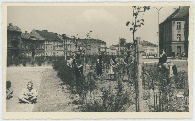 Prace przy zieleńcu na Babince w Kaliszu